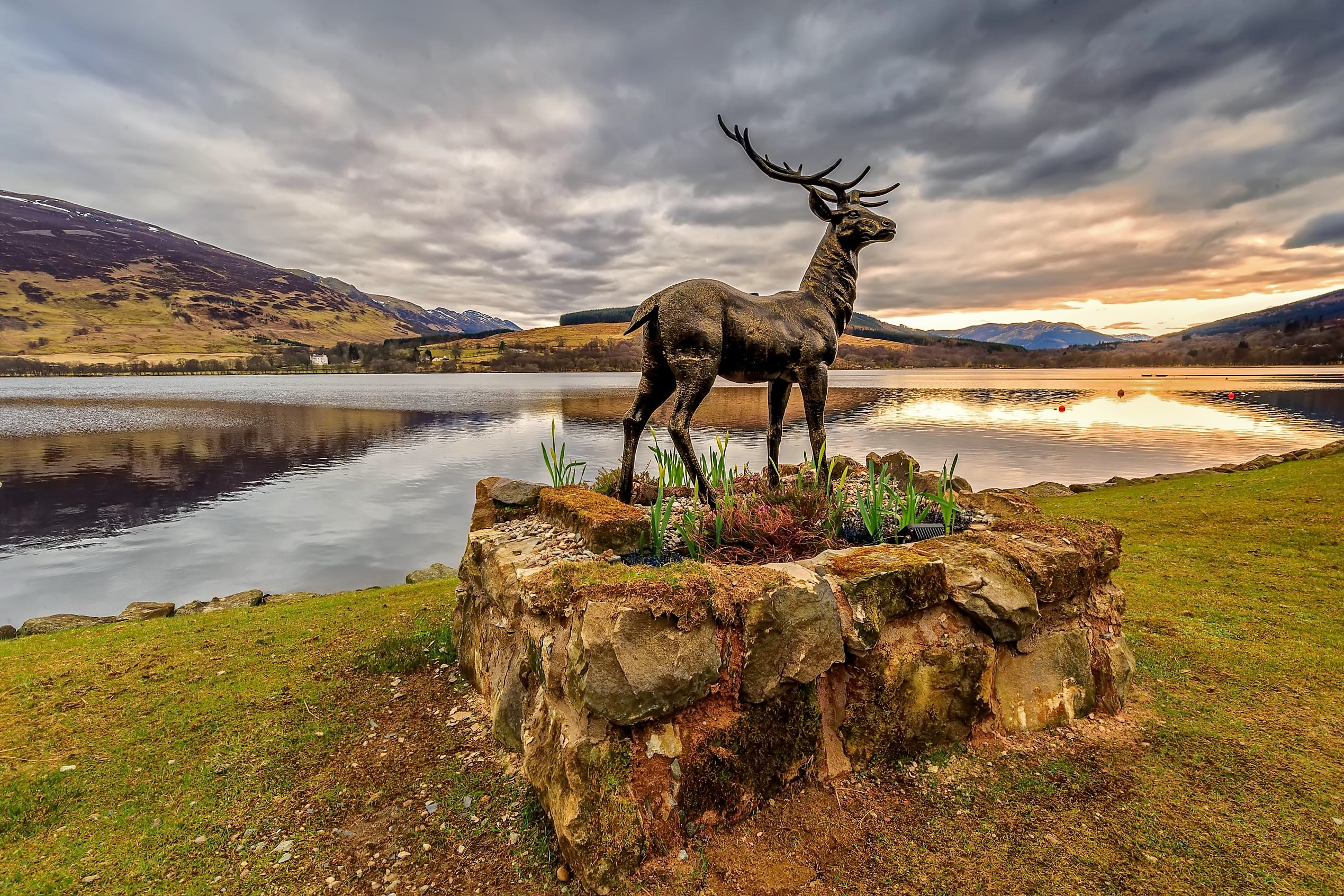 Majestic Stan The Stag Loch Earn